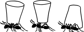 "ants playing ""the cup game"""